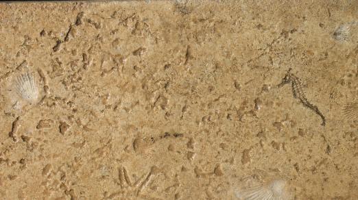 Seashell Stamp Concrete Orange County